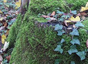 Waldtag
